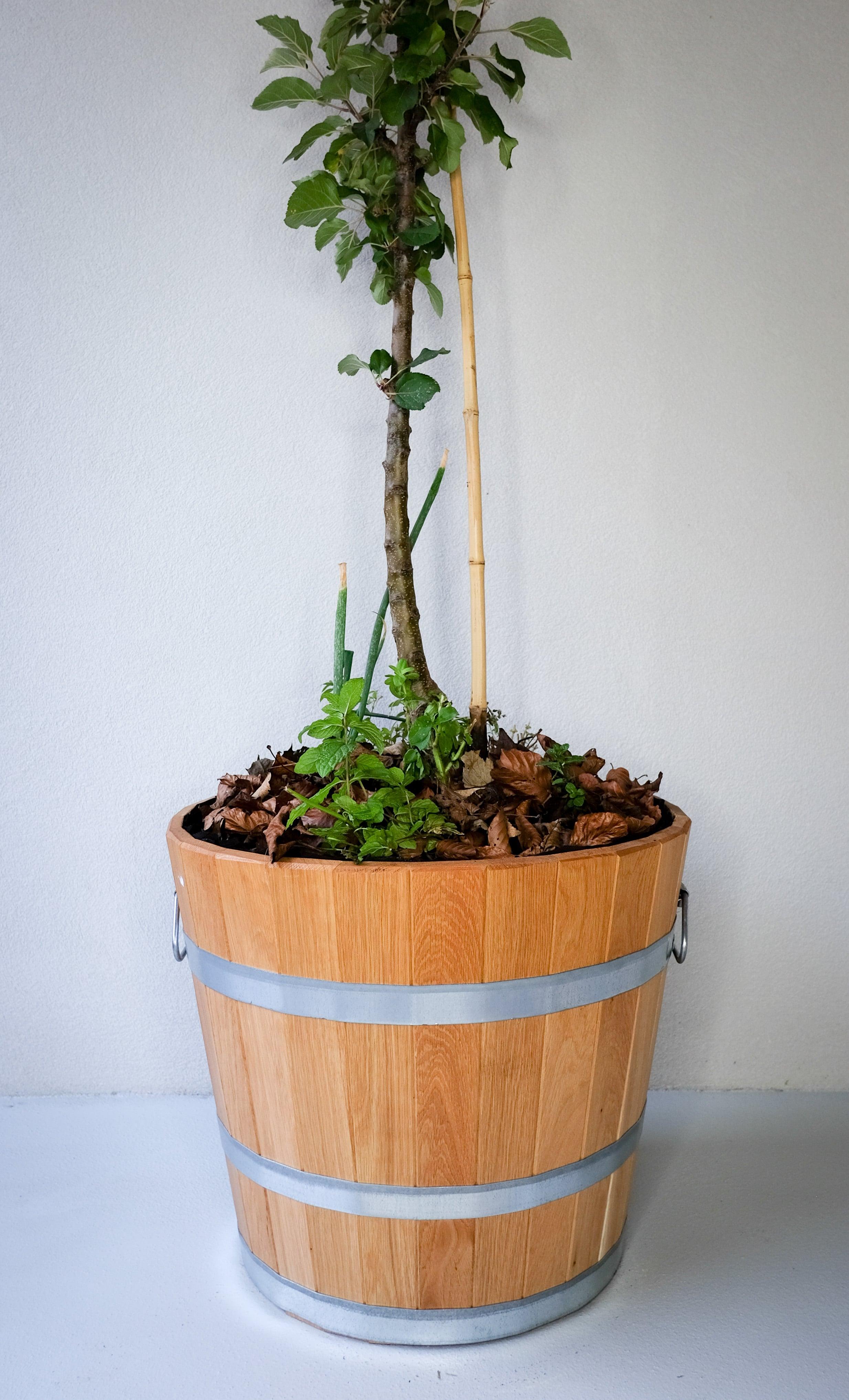 apfelbaum im fass dein kleiner obstgarten auf kleiner fl che. Black Bedroom Furniture Sets. Home Design Ideas