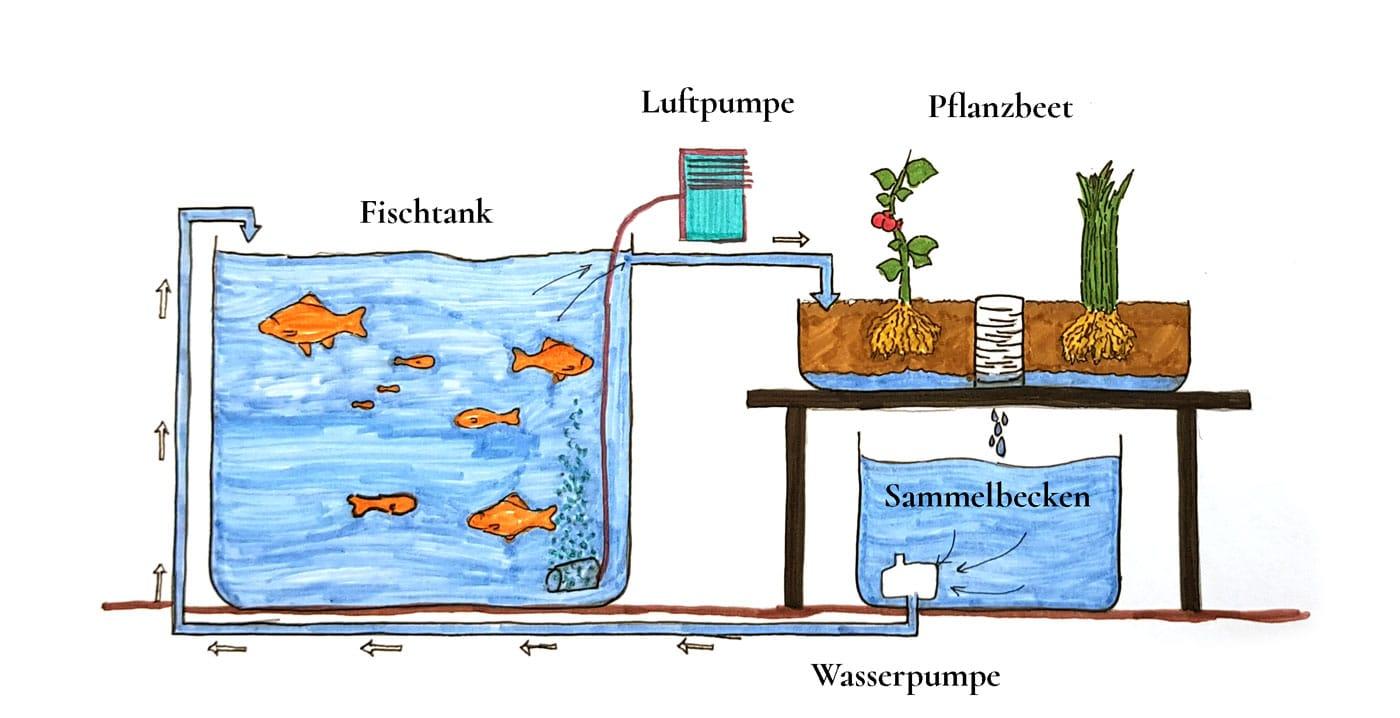Abbildung 4: Allgemeine Darstellung einer Aquaponikanlage mit den generellen Grundausstattungen.
