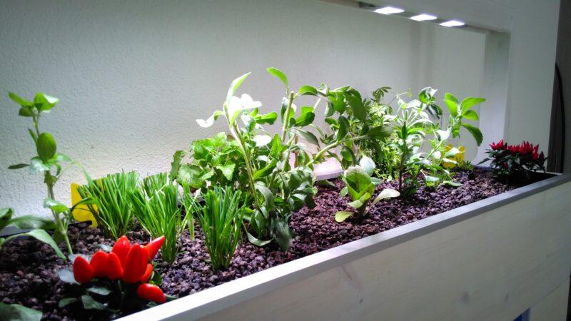 Mit künstlicher Beleuchtung und natürlichen Nährstoffen wachsende Pflanzen.
