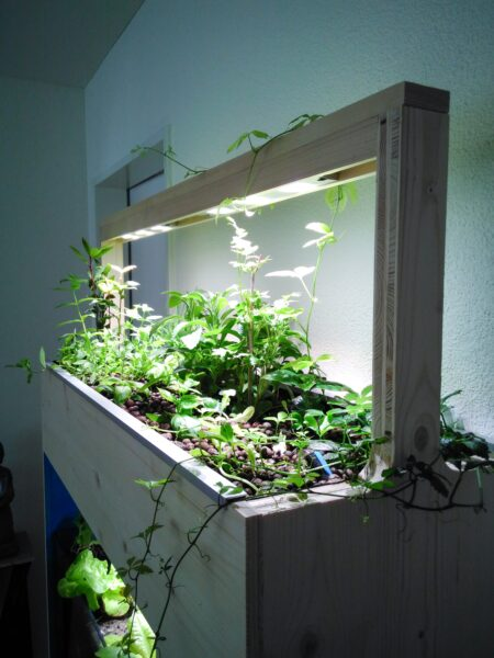 In Aquaponik wachsen Pflanzen bis zu doppelt so schnell wie in Erde.