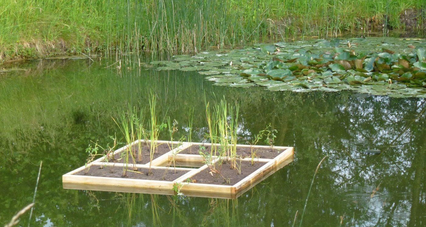 Bepflanzte schwimminseln nat rliche teichreinigung f r for Jungfische im teich