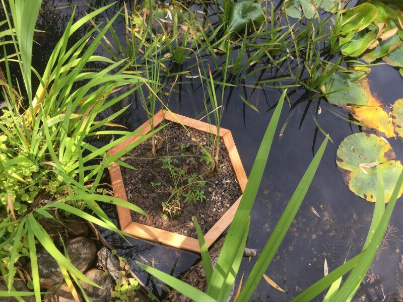 Bepflanzte Schwimminsel zur Teichreinigung Hexagon 60cm